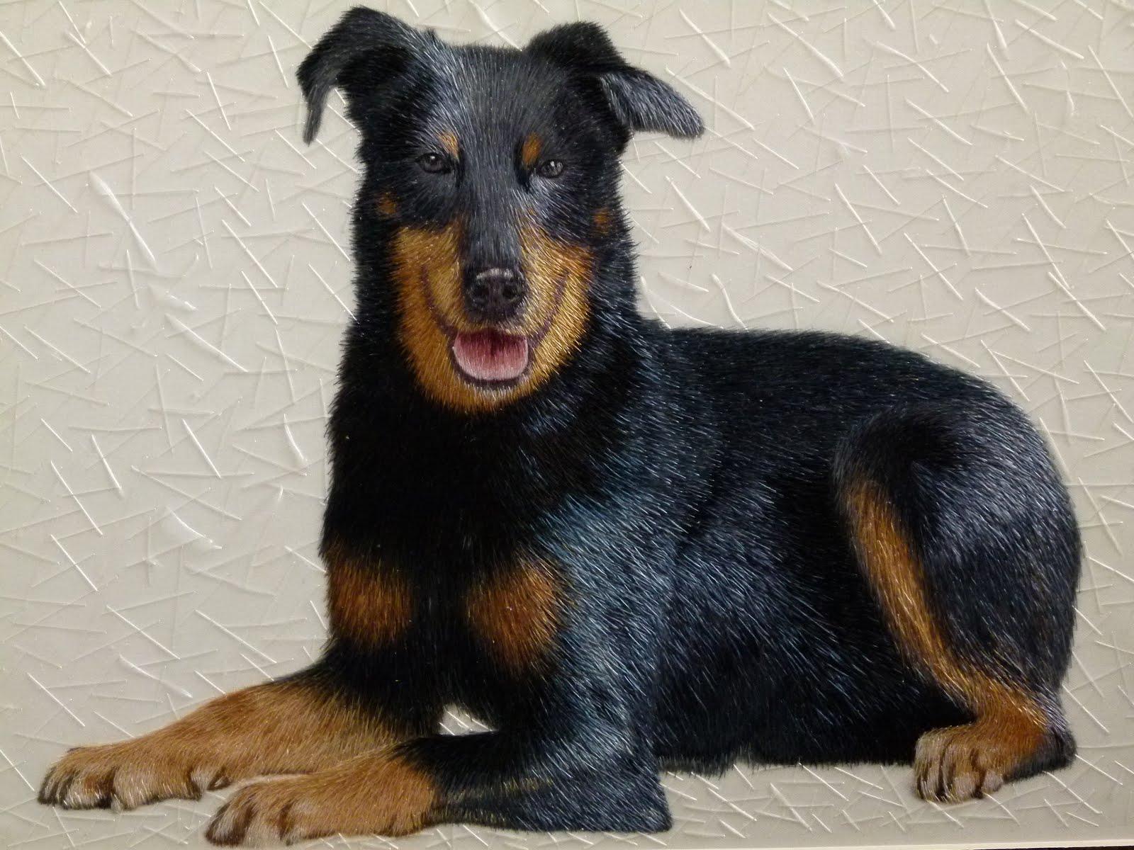 Doberman Pinscher Puppy Images Short Stitches Require a Lot